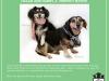fdf_adoptionflyer_hallieharry-jpg