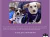 fdf_adoptionflyer_lucyricky-jpg