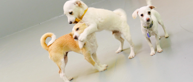 Puppies sent to Sevadog