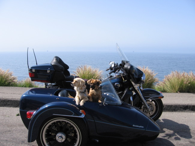 Do's and Don'ts for Summer Travel with Your Pet