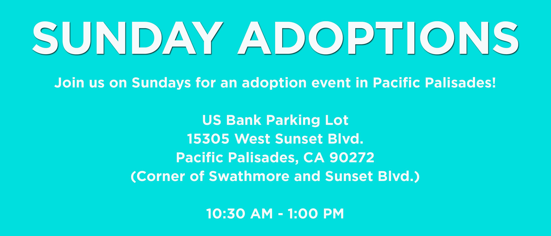 Sunday Adoptions