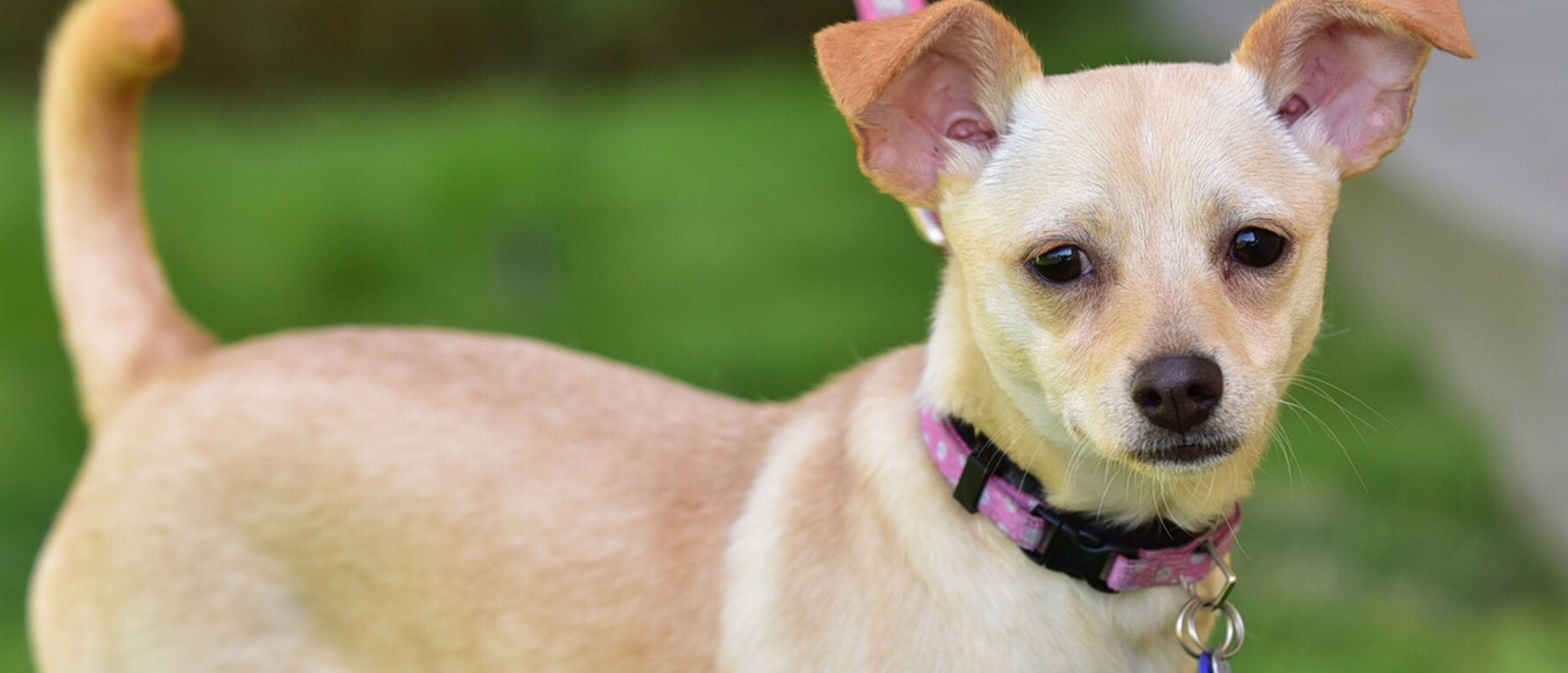 Chanel needs a home