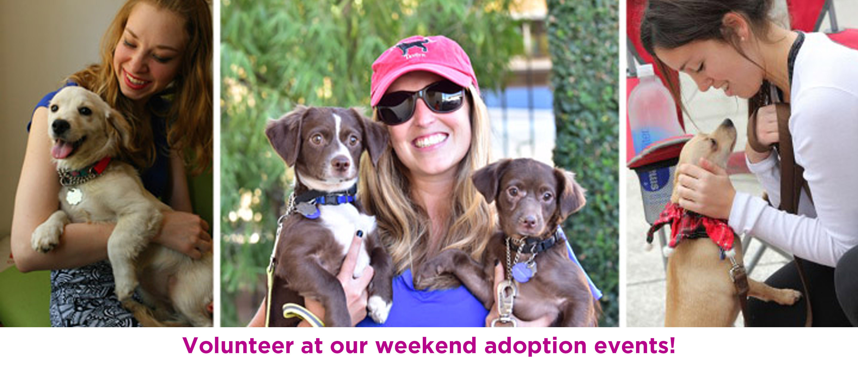 Volunteer at our weekend adoption events!