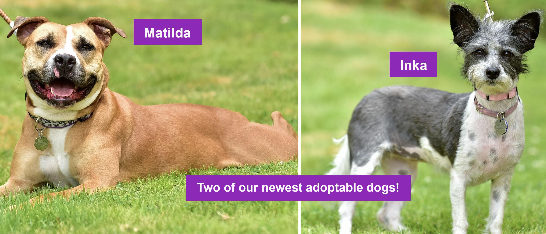 Adoptables!