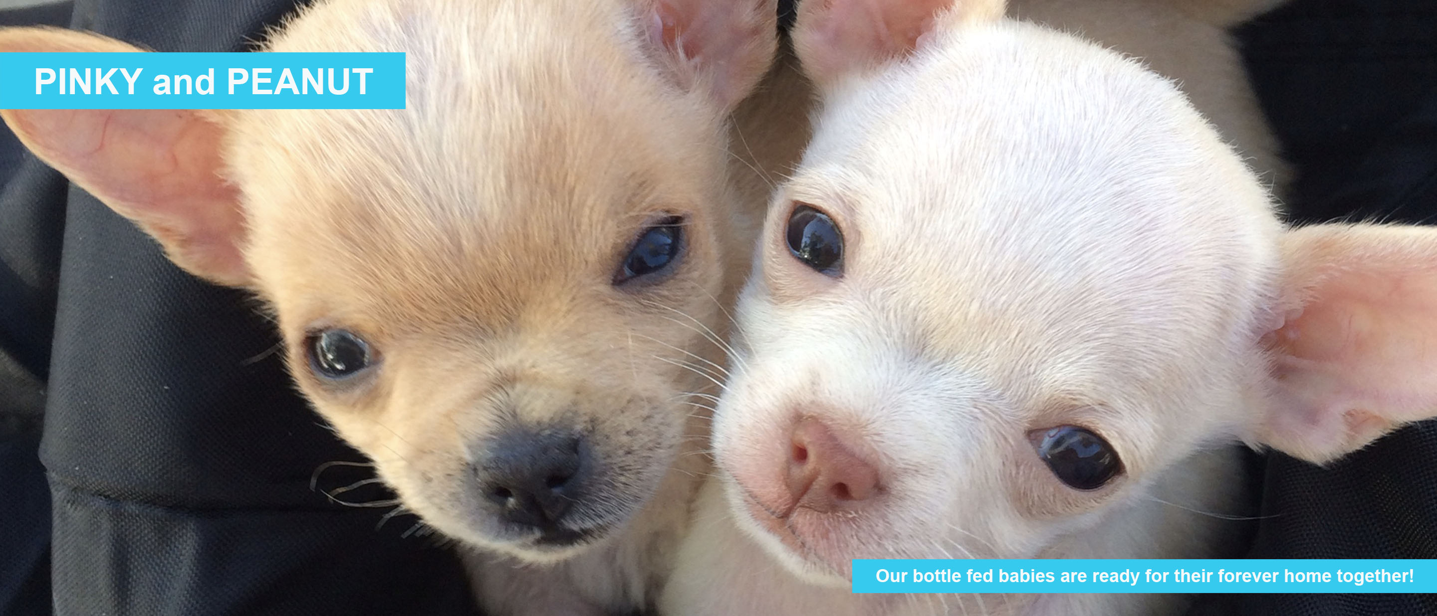 Pinky and Peanut — Ready for their forever home together!