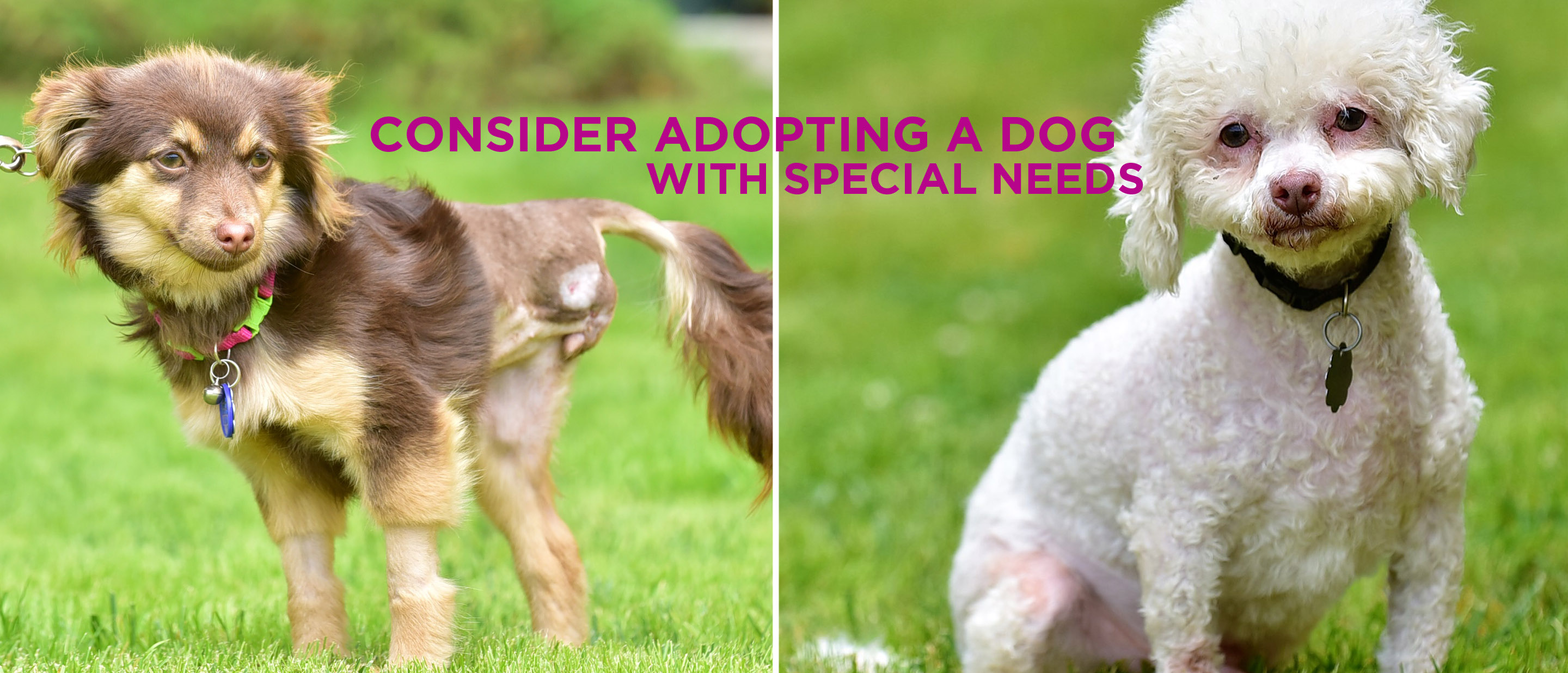 Consider adopting a dog with special needs