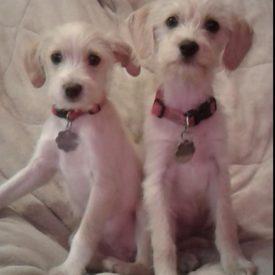 Coco & Lola