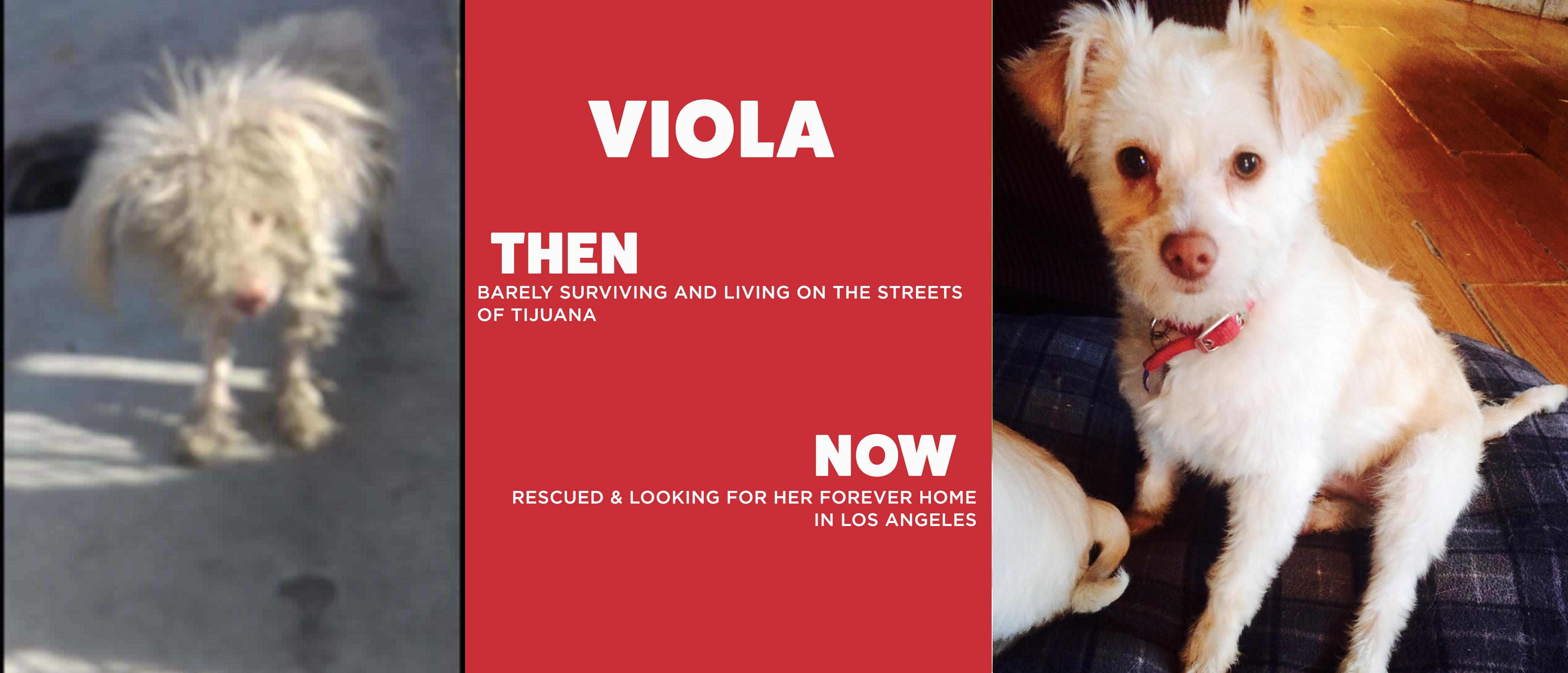 Viola!