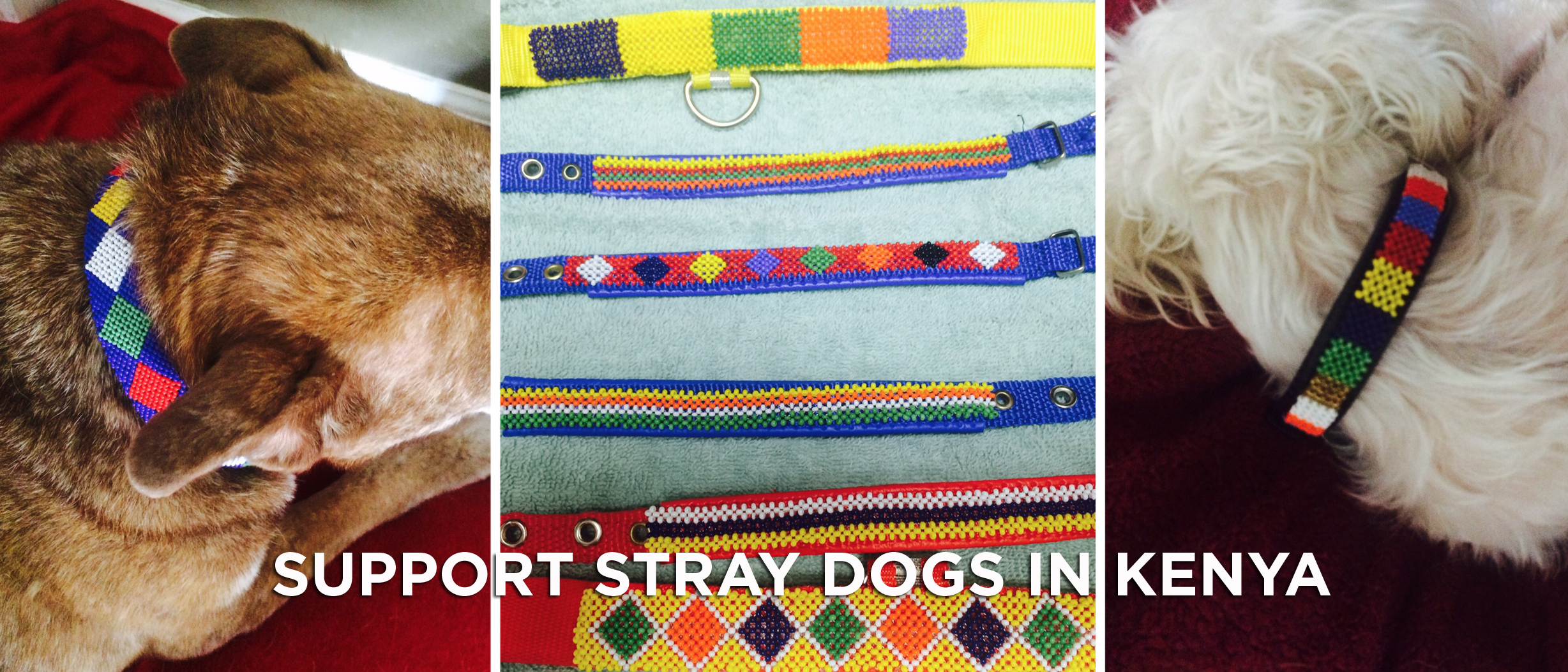 Support Stray Dogs in Kenya