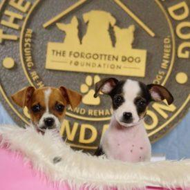 Georgie & Ginger