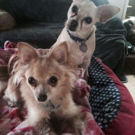 Bambi & Chacha