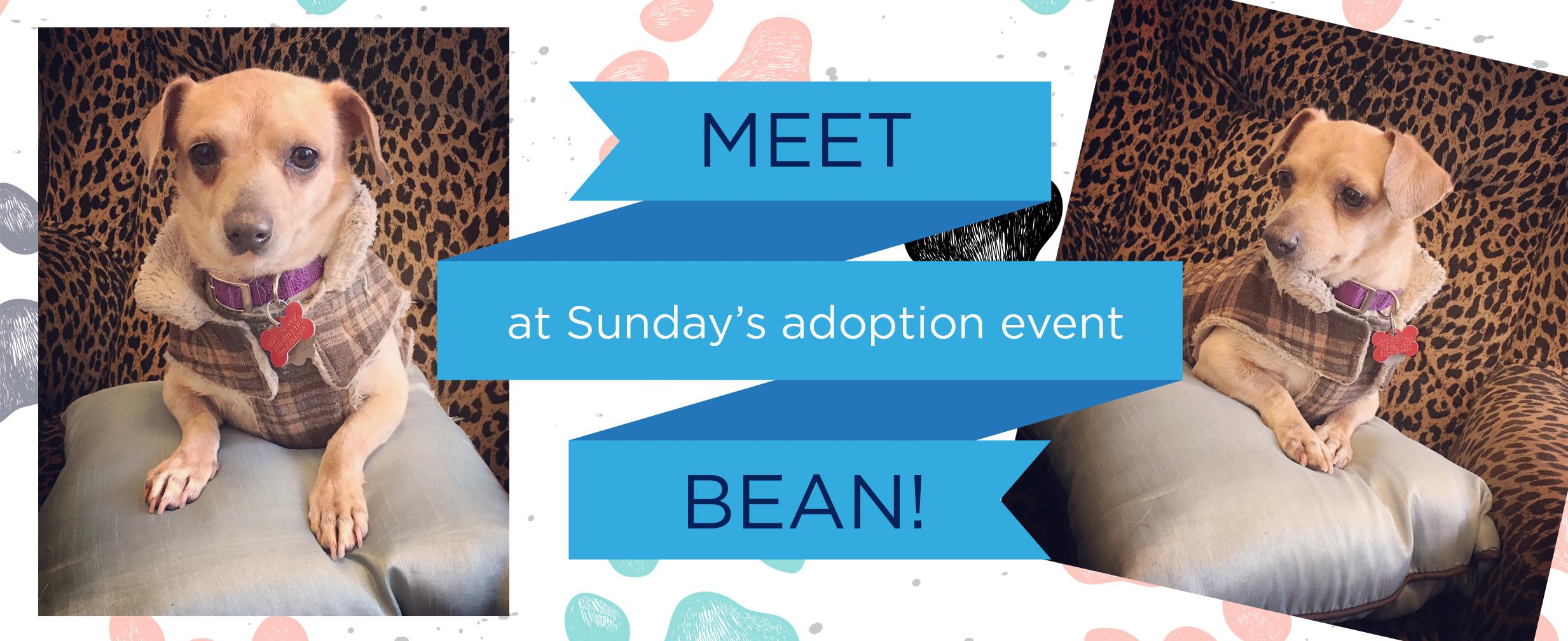 Meet Bean!
