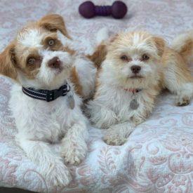 Charlie and Milo