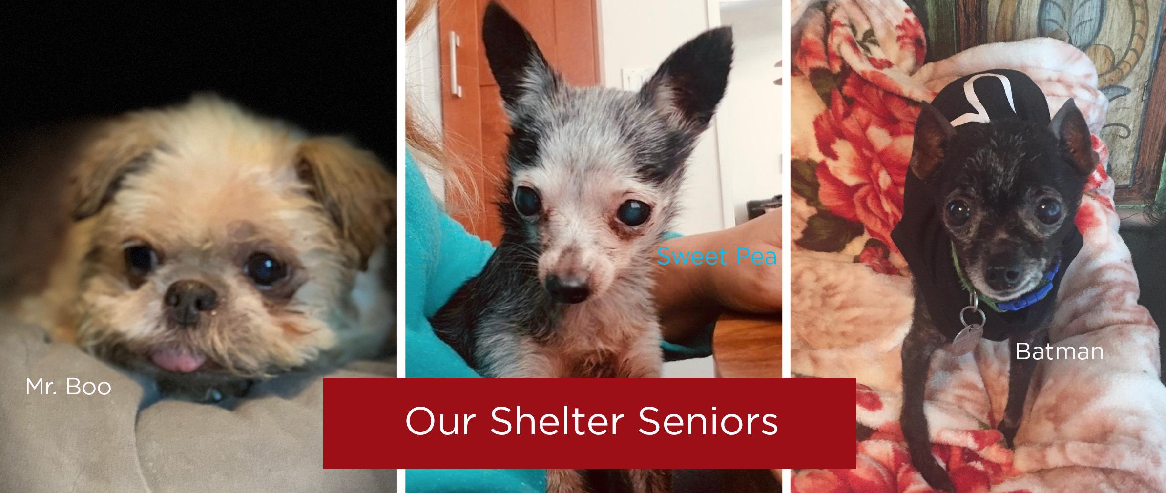 Shelter seniors